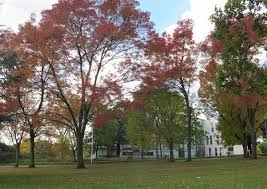 Trees 99