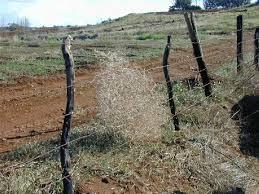 Tumbleweed Fence 2